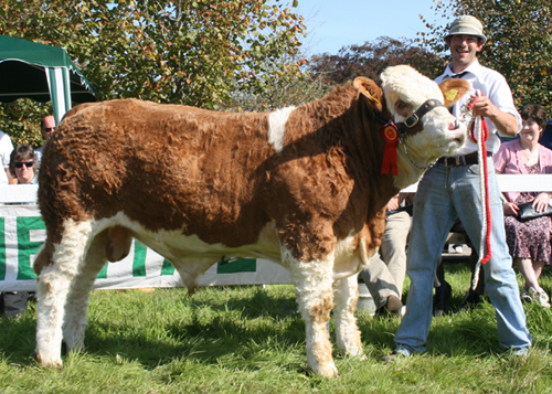 "SLIEVENAGH FANTASTIC - ""Unbeaten in the show ring"""